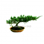 Bonsai Viveroonline.com.co-2