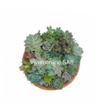Suculentas Viveroonline.com.co-2