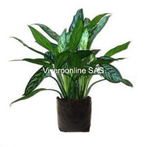 Viveroonline.com .co 4